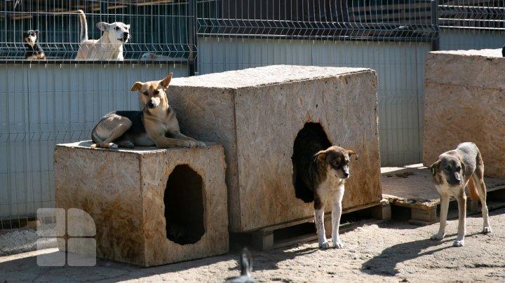 PROTEST la Primărie. Animalele sunt tratate cu cruzime la centrul de sterilizare, susțin activiștii (FOTOREPORT)
