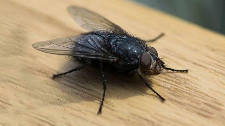 Un bărbat din Franța și-a aruncat în aer jumătate de casă în timp ce încerca să prindă o muscă
