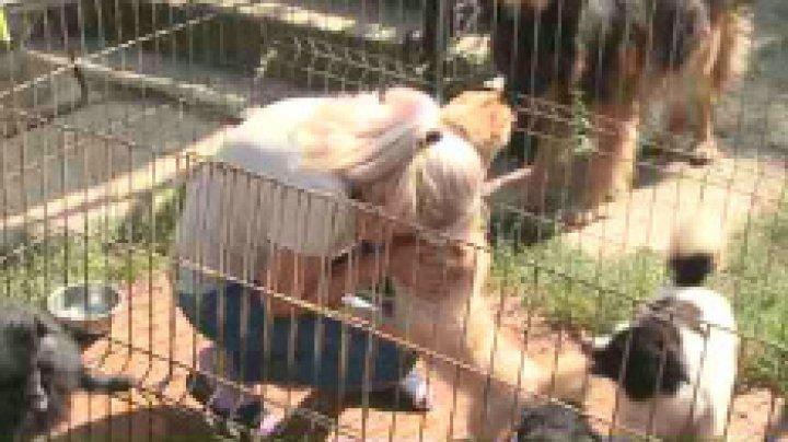 O familie de dresori din Capitală nu mai are cu ce să-și întrețină animalele și cere ajutorul oamenilor