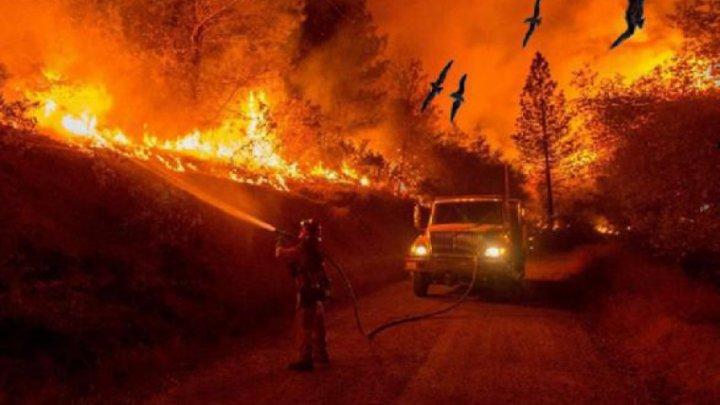 Plan bazat pe tehnologie de ultimă oră! Incendiile de vegetaţie devastatoare din Australia ar putea fi stinse într-o oră de la izbucnire