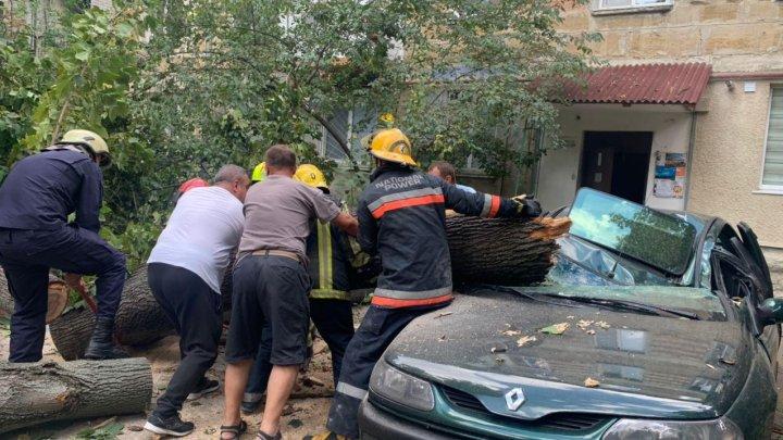 INCIDENT la Botanica. Un automobil a fost făcut ZOB de un copac prăbușit peste el (FOTO)
