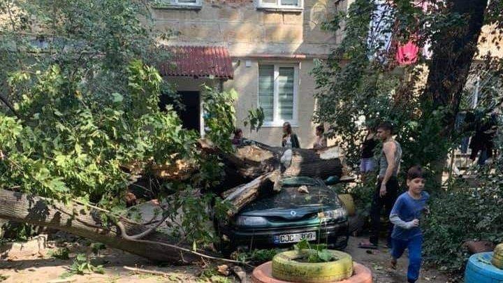"""""""E groaznic, putea urma o tragedie"""". DETALII despre incidentul de la Botanica, unde un copac a DISTRUS o mașină"""