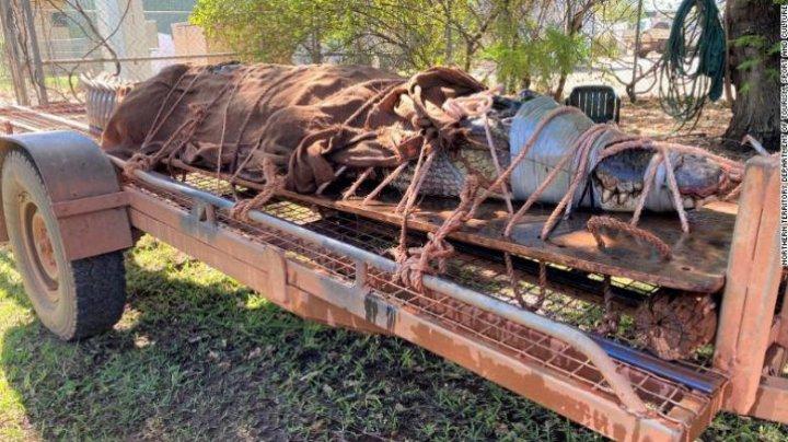Crocodil de peste 4 metri lungime, capturat într-o zonă turistică populară din Australia