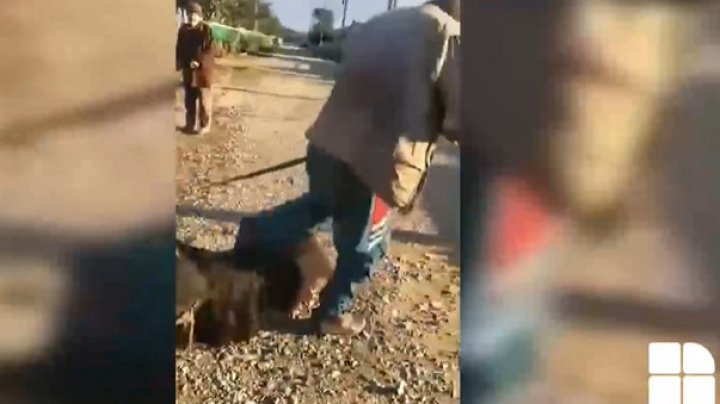 """""""Îl rugam să nu-l omoare"""". Martorii, despre bărbatul care și-a bătut calul cu bestialitate"""