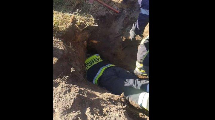 (VIDEO) Momentul în care salvatorii scot de sub pământ patru câinișori îngropați de vii la Botanica