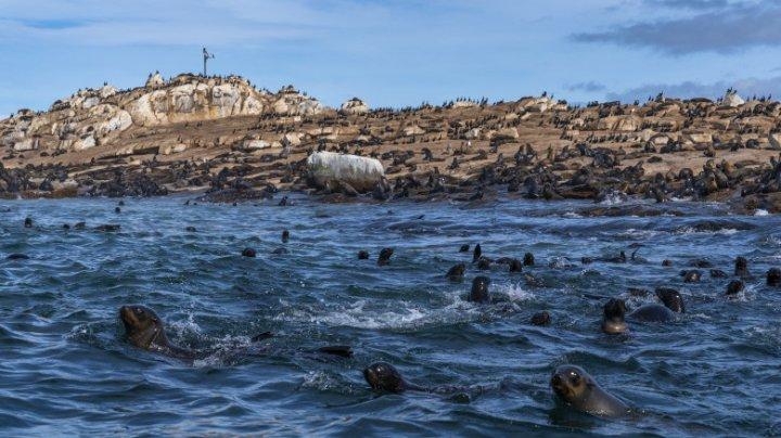 """Mii de pui de focă găsiți morți pe țărmul Namibiei: """"Ne aflăm în pragul unei catastrofe"""""""