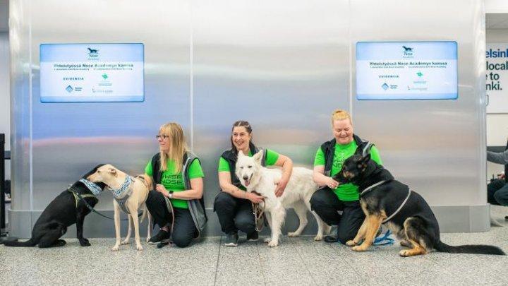 Experimentul finlandez cu câini dresați să miroase COVID-19, un succes