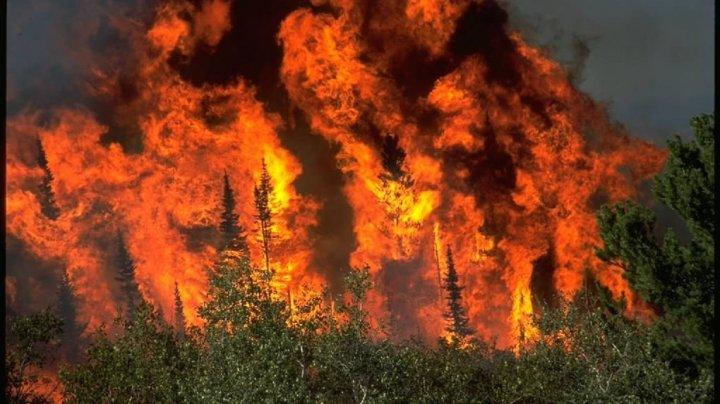 Incendiile de vegetaţie fac ravagii în statul Colorado, afectat de secetă