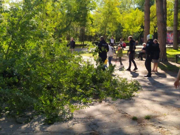Un copac a căzut lângă o bancă pe care stăteau membrii unei familii, în parcul Valea Trandafirilor (FOTO)