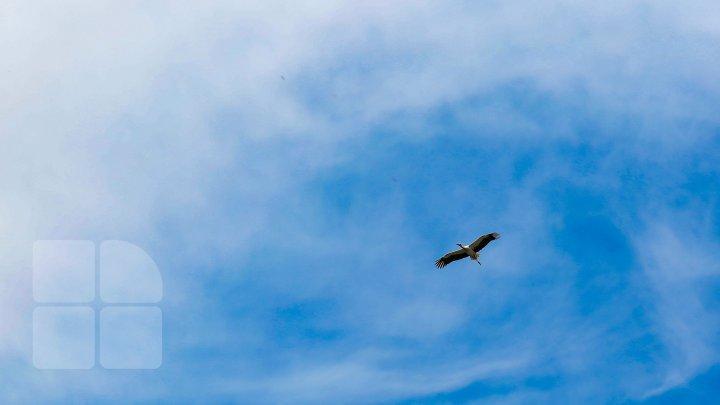 În unele zone din Europa nu mai auzi păsările. 80% din habitatele naturale ale UE se degradează continuu