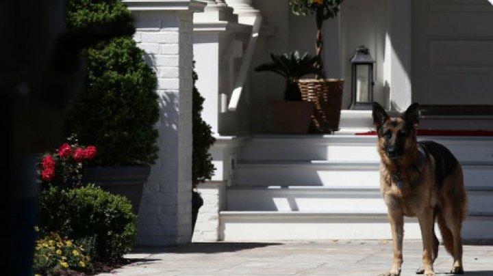 Joe Biden îi va aduce la Casa Albă pe Champ și Major. FOTO cu primii-câini ai Americii