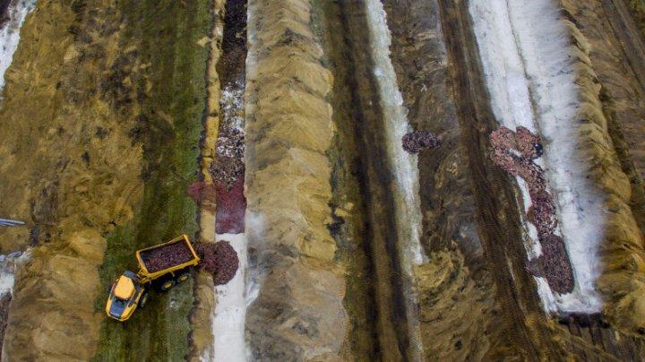 Nurcile ucise în masă în Danemarca ies din morminte și provoacă groază în rândul danezilor