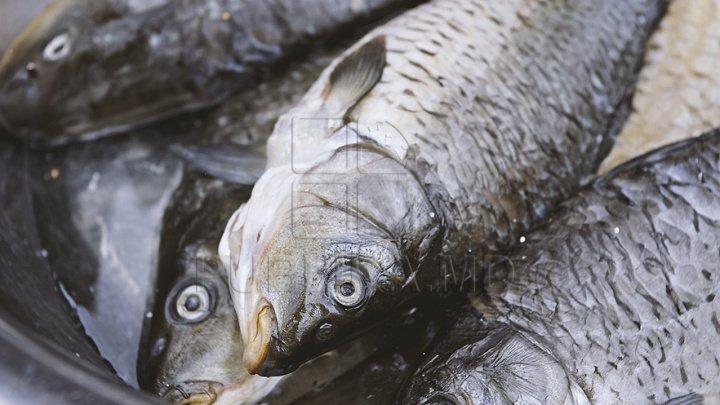 Organizația Mondială a Sănătății cere interzicerea vânzării de animale vii în piețe: Sunt sursa a 70% din bolile și virusurile nou apărute