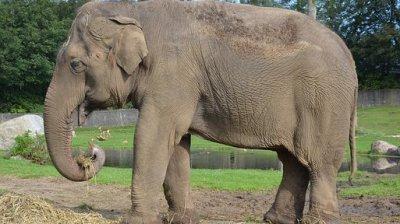 Un elefant a omorât un angajat al unei grădini zoologice din Spania cu o singură lovitură de trompă