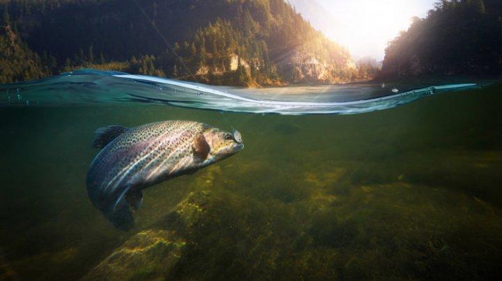 """Peştii de apă dulce sunt în declin """"catastrofal"""". 80 de specii au dispărut"""