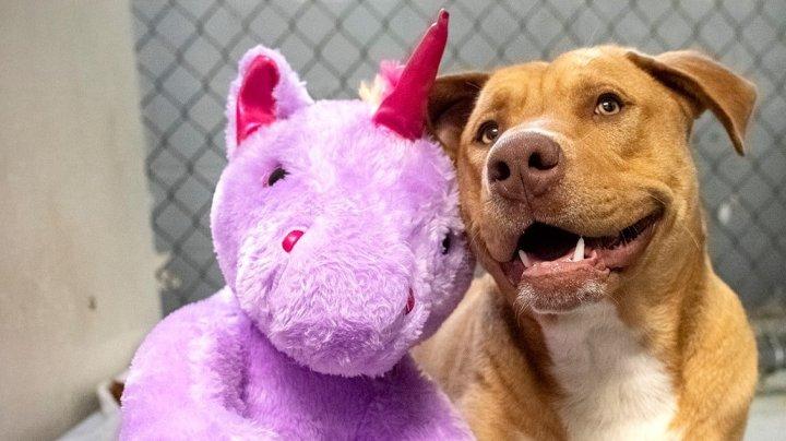 Un câine fără stăpân din SUA a primit cadou un unicorn de pluș pe care îl furase de cinci ori dintr-un magazin (FOTO)
