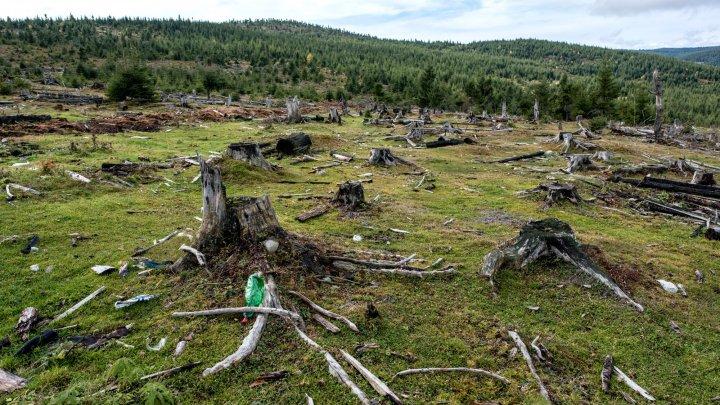 Pădurile tropicale dispar cu o viteză uluitoare. O arie de dimensiunea teritoriului Franței, distrusă în ultimii ani