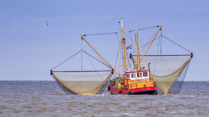Pescuitul cu şocuri electrice, interzis în UE. Curtea Europeană de Justiţie a respins contestaţia Olandei