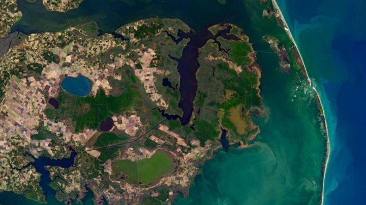 """Fenomenul """"pădurilor fantomă"""". Cum au apărut petele gri surprinse în imaginile din satelit"""