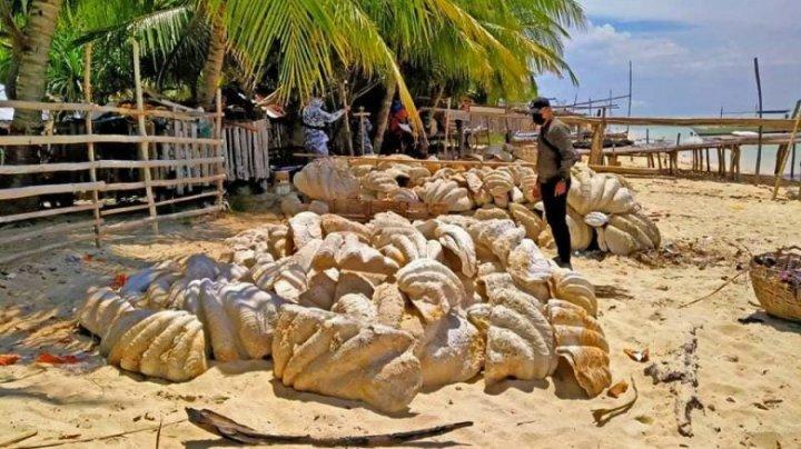 Scoici uriașe de 25 de milioane de dolari, capturate în Filipine