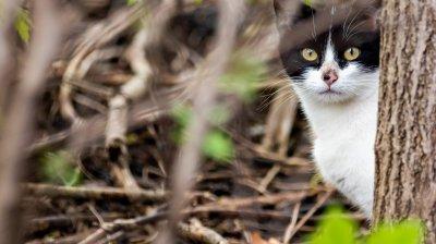 Motivul pentru care 1.000 de pisici au fost eliberate pe străzile din Chicago