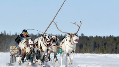 Arctica rusească se topește în ritm accelerat iar peste 2 decenii ar putea deveni regiune agricolă