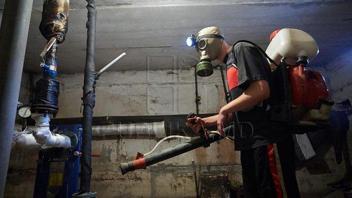 În subsolurile blocurilor din Chișinău au loc lucrări de dezinsecție și deratizare
