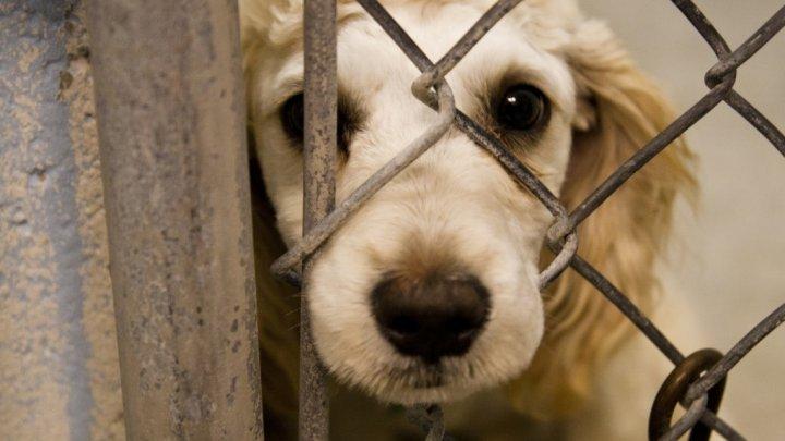 Moment istoric. Legea britanică va recunoaște animalele ca ființe cu drepturi