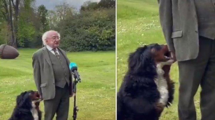 Câinele preşedintelui Irlandei, vedetă pe internet, după ce a început să se joace cu stăpânul său în timp ce acesta oferea un interviu