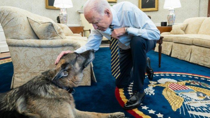 """""""Îmi vei lipsi"""": Unul din câinii lui Joe Biden, Champ, a murit"""