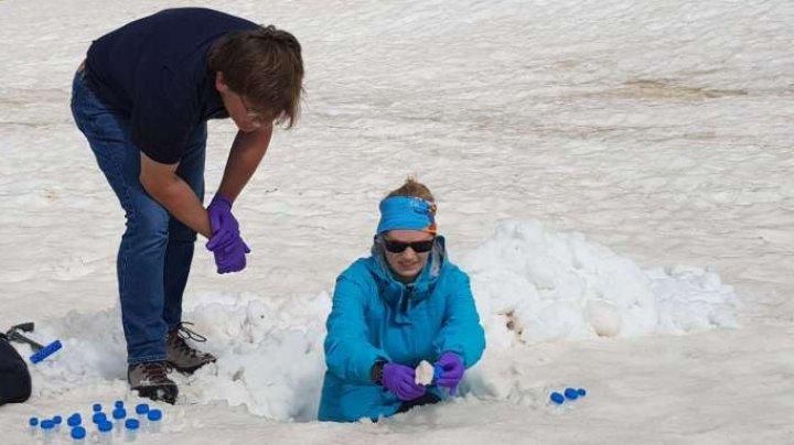 Coloniile de alge de pe gheţari ar putea fi cheia pentru a înţelege impactul schimbărilor climatice