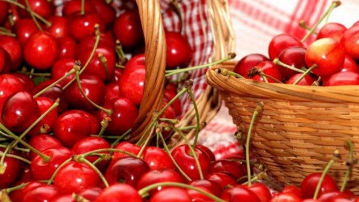 Veselie şi voie bună. În satul Ruseştii Noi din raionul Ialoveni a avut loc Festivalul cireșelor şi al vărzarilor