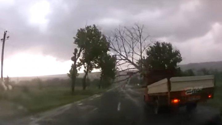MOMENTUL în care un copac se PRĂBUȘEȘTE pe o șosea din raionul Nisporeni, în fața unei camion (VIDEO)