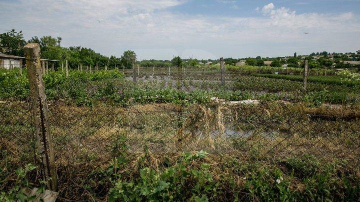 RAVAGII în mai multe localităţi din raioanele Ungheni și Soroca, în urma ploilor. Zeci de hectare de culturi agricole, DISTRUSE