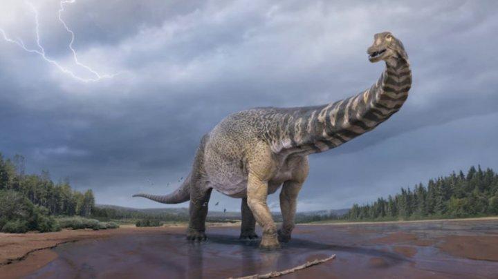 O specie de dinozaur descoperită în 2006 ar fi cea mai mare găsită vreodată în Australia