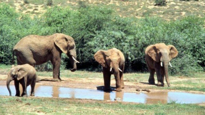 28 de elefanți din India au fost testați pentru coronavirus, după moartea unei leoaice testată pozitiv