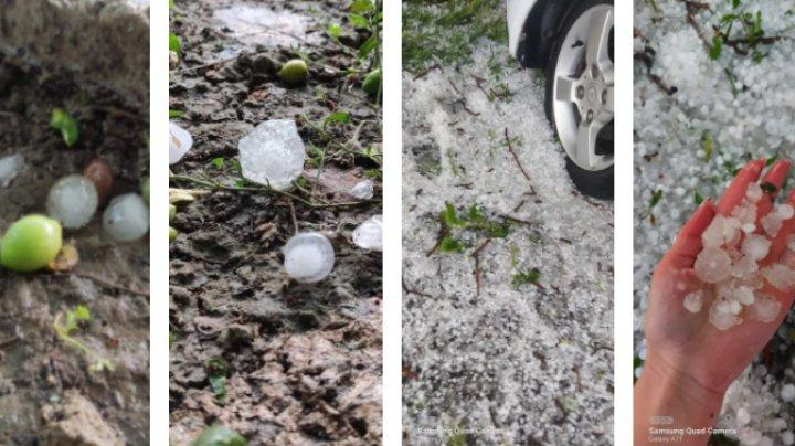 Ploaia cu grindină a făcut RAVAGII la Ungheni. Copaci doborâţi şi culturi agricole distruse (VIDEO/FOTO)
