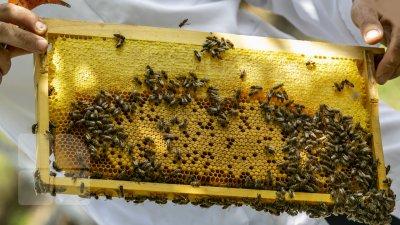 Mierea de tei a fost recoltată, iar cea de floarea soarelui este încă aşteptată. Ce spun apicultorii din ţara noastră