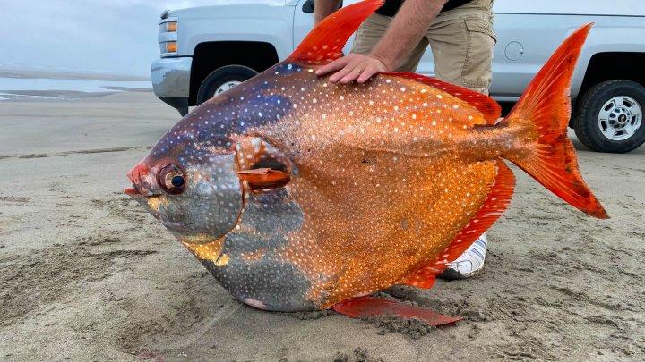 Un pește de 45 de kilograme, descoperit pe o plajă din Oregon (FOTO)