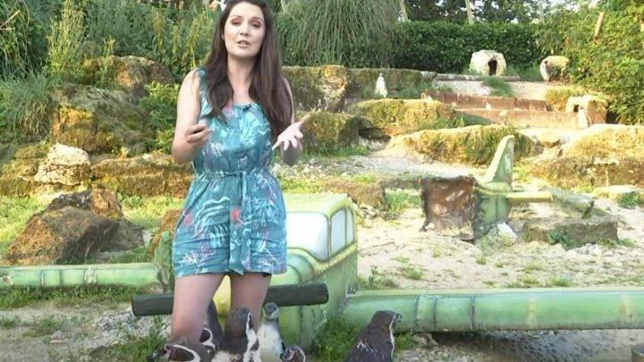 O prezentatoare de știri din Marea Britanie a fost mușcată de un pinguin, în direct. Jurnalista se afla într-o grădină zoologică din Londra