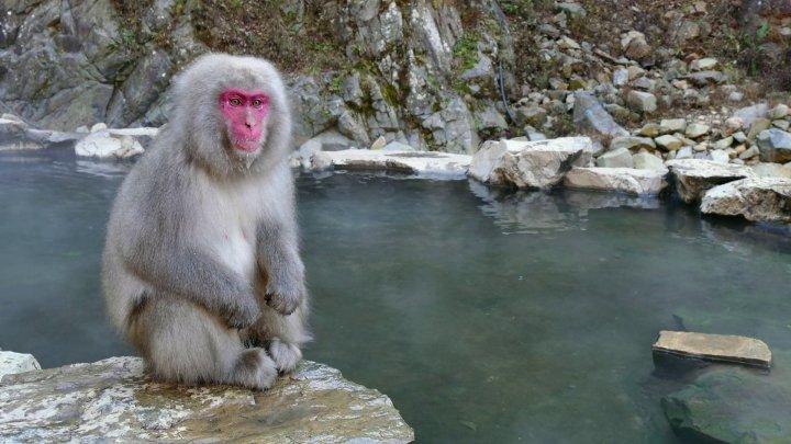 China a raportat primul deces provocat de un virus extrem de rar, răspândit de maimuţe