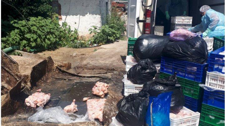 Zeci de tone de carcase de pui infestate cu Salmonella au fost depistate de inspectorii ANSA (FOTO)