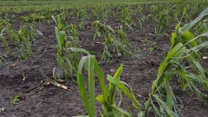Zeci de culturi agricole și gospodării din țară, afectate în urma ploilor puternice