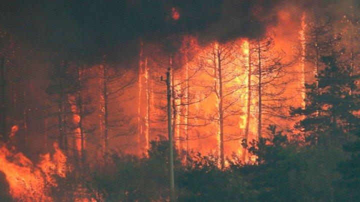 Incendii forestiere în Bulgaria: flăcările se extind şi fac victime