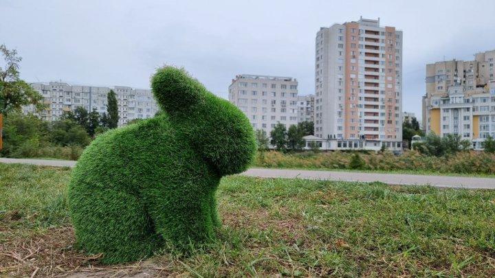 Într-un parc din Capitală au apărut animăluţe verzi (FOTO)
