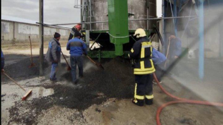 Incendiu de PROPORȚII la o uscătorie din raionul Edineț. 15 tone de semințe de floarea-soarelui au fost nimicite (FOTO)