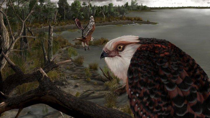Oamenii de știință din Australia au descoperit o fosilă a unui vultur care ar fi trăit acum 25 de milioane de ani (FOTO)
