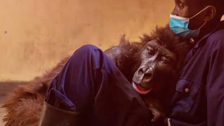 Gorila care a devenit celebră în toată lumea după un selfie cu îngrijitorul ei a murit