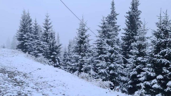 IARNA şi-a intrat în drepturi peste Prut. La munte NINGE ca în poveşti (FOTO)