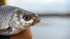 Рыбная ловля на естественных водоемах запрещена до 10 июля 2010 года